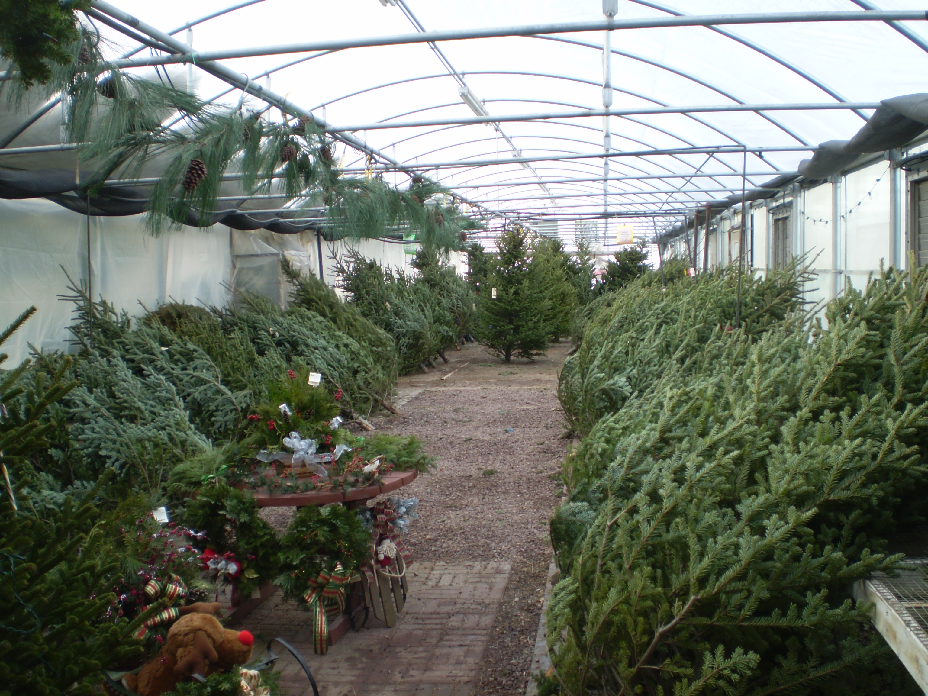 Fresh cut christmas trees from flowers by sleeman, serving houghton, hancock, chassell, keweenaw, and the surrounding communities.